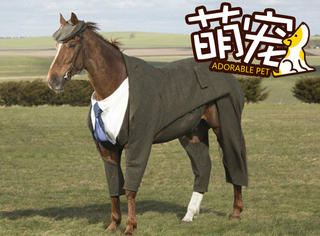 【萌宠】当英国佬给赛马穿上衣服时,橘子君笑了!