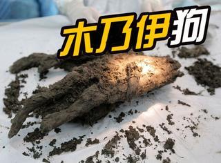 俄罗斯发现一只一万年前的狗,还保存得很完整