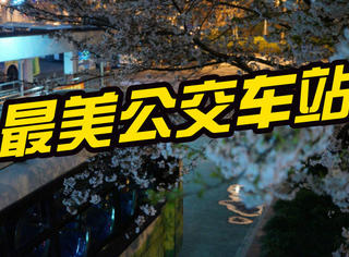 上海最美公交车站告诉你:夜晚的樱花和车站最配哦!