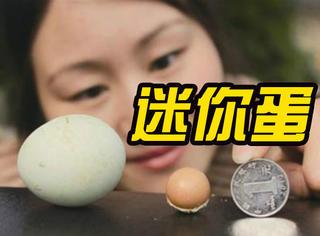 母鸡产下迷你蛋,大小介于五角和一元硬币之间!