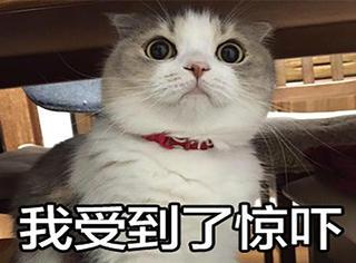 【我槽日报】英国48岁女子与男友分手,伤心欲绝嫁给两只猫...