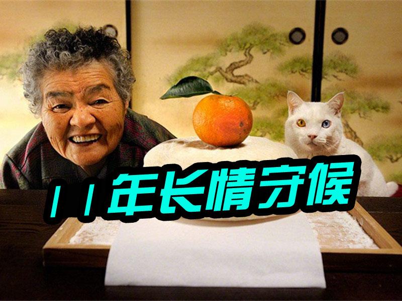 这只小猫用一辈子守候了老奶奶11年!_橘子娱乐