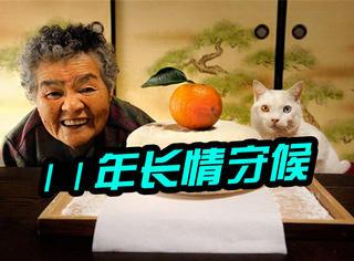 这只小猫用一辈子守候了老奶奶11年!