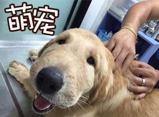 """汪蜂恋,狗狗被亲肿脸依旧笑对""""狗生"""":心态最重要"""