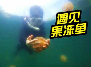 橘子君在帕劳:我潜入水底,亲手捧起Q弹的水母