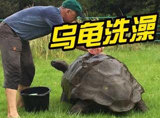 世界上最老的乌龟洗澡,洗去了身上184年的污垢