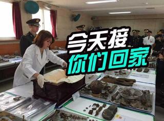 青山此处埋忠骨:韩国今向我国移交36具志愿军遗骨
