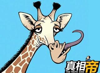 【真相帝】蚂蚁不睡觉、螳螂的耳朵在腿上:关于动物的冷知识!