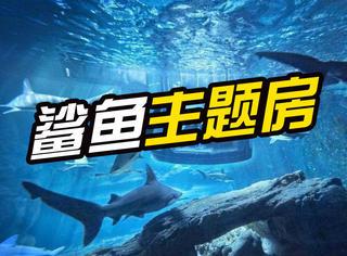 巴黎水族馆首推鲨鱼主题房,35只鲨鱼陪你共眠!
