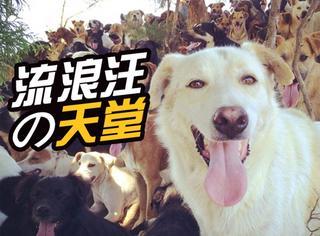 哥斯达黎加藏着一座狗岛,对1000只流浪狗来说天堂也不过如此!
