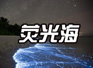 深圳最近频现美丽荧光海,但背后真相让橘子君吓到了!