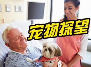 加拿大医院开放宠物探望日:用萌萌的美好对抗病魔