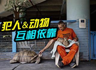 这个监狱有点暖:犯人们变成了150多种动物的铲屎官!