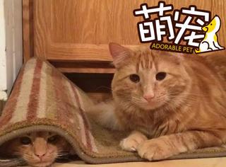 【萌宠】这两只猫长得太像了,第一次见面后就粘在了一起!