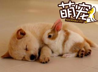 【萌宠】春天来了,萌宠们的睡姿越来越销魂了!