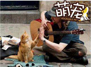 """【萌宠】贫困的歌手救了一只猫,没想到它竟是只""""招财猫""""!"""