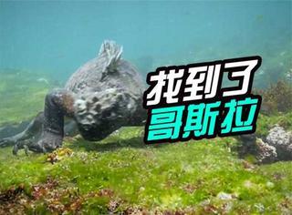 """电影中的怪兽""""哥斯拉"""":现在人类在太平洋中将它找到了!"""