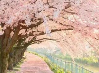 春暖花开,谁能陪我漫步这么美的路?