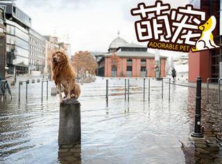 【萌宠】城市里翻垃圾桶的狮子王,摘掉发套竟然是只汪!