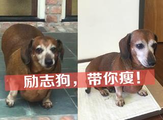 励志 | 连狗狗都瘦了!你还在肆无忌惮的做胖子?