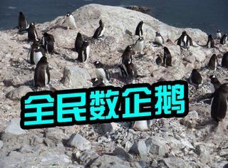 科学家向全世界求助来数企鹅,为科学奉献的时候到了!