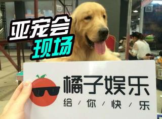 """橘子君亲赴亚洲宠物展,告诉你萌宠""""聚会""""是怎样的大场面!"""