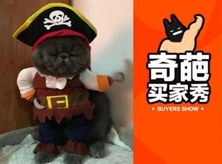 【一周买家秀】喵星人穿海盗服一脸嫌弃 宋仲基同款迷彩服检验颜值