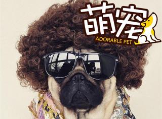 【萌宠】 只需一顶假发,这些宠物就可以变成fashion baby