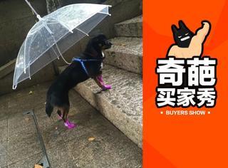 【奇葩买家秀】竟然还有这样的狗狗雨伞,厂家脑洞好大!