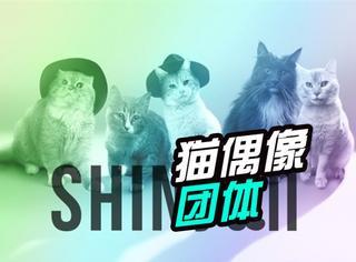 萌!SM公司推出猫偶像团体SHINyan