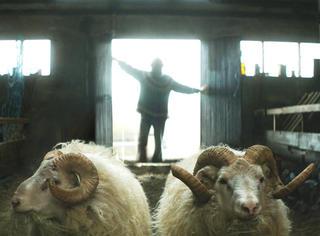 只有32万人口的冰岛,却拍出了这么温暖的电影