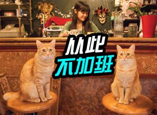 日本新规:猫咪工作不得超12小时,那我们为什么还加班!