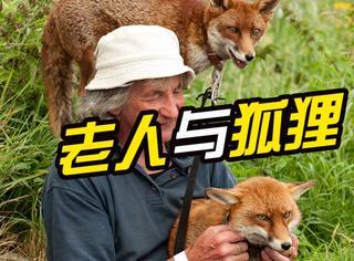 老人救了三只狐狸,结果狐狸伤好后都不走了