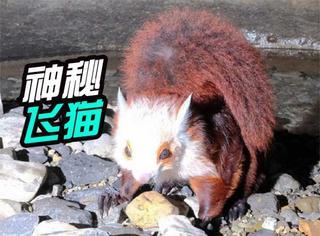 """中国第一长洞发现""""飞猫"""",网友:难道不是天猫?"""