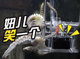 话说,这是世界上第一只会拍照的章鱼!