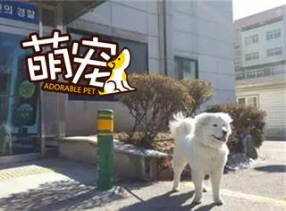 【萌宠】韩国警局万人迷不是宋仲基,是我!