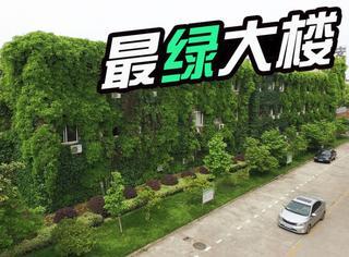"""安徽这栋办公楼好""""绿"""":感觉像误闯了森林公园"""