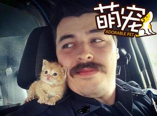 【萌宠】这只小猫被警察救下,成了新一代片儿警!