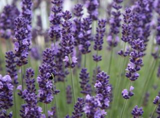 """为什么紫色会叫""""基佬紫""""?丨壹读知道"""