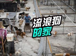 为了400只流浪狗,北京大妈租了3亩地建了狗狗之家!