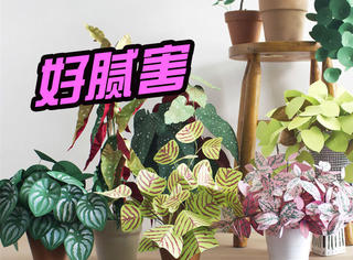 光用纸,她就能在家养全世界的植物!