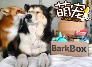 【萌宠】原来,单身狗和狐狸精也能组成cp!