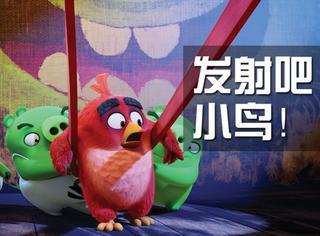 【橘子鉴影】《愤怒的小鸟》:不要管猪和鸟的搏斗了,让小鸟萌死我吧!