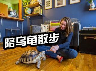 这里有一份美差:陪乌龟散步,收入还不少!