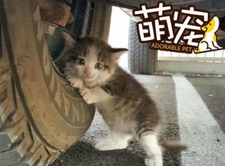 """【萌宠】躲在卡车下的猫宝宝用不能拒绝的眼神说""""带我回家""""!"""