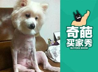 【奇葩买家秀】狗狗剃了毛,都变抑郁了!