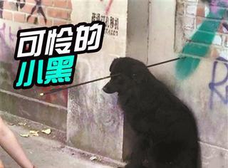 太残忍,流浪的小黑狗被箭刺穿了头部