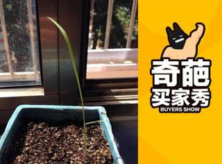 【奇葩买家秀】网上买种子,长出来是什么全凭运气!
