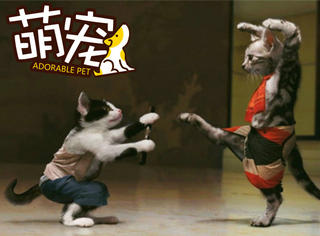 【萌宠】看这三只猫打架,我有种莫名的尴尬!