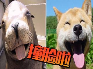 【萌宠】最萌撞脸,海豹、汪星人傻傻分不清楚